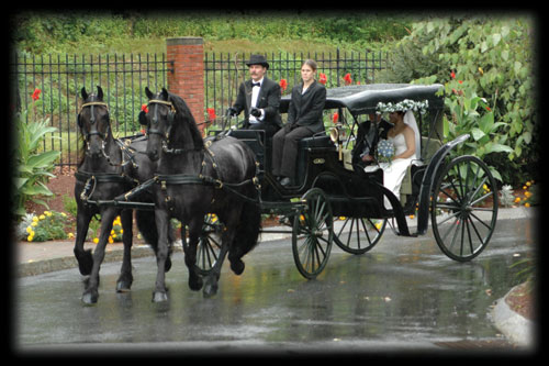 Carriage Rides - Friesians of Majesty - Friesian Stallions and
