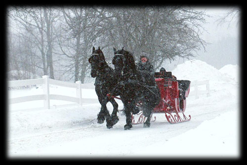 sleigh rides friesians of majesty friesian stallions and horses