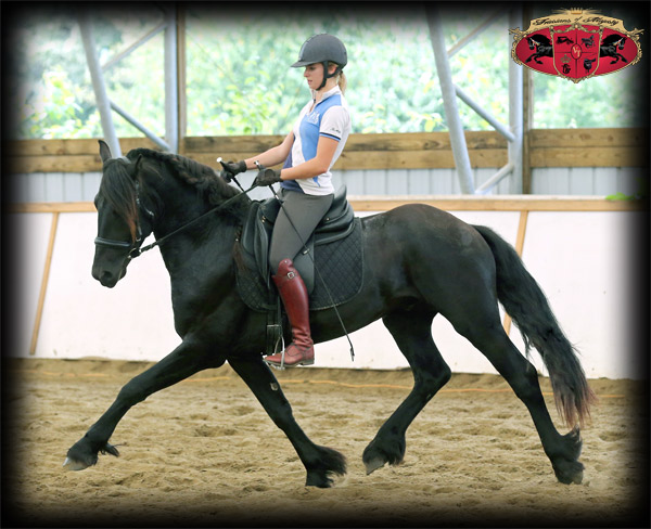 Dressage Clinics with Friesians