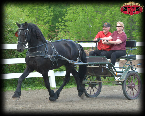 Driving Lessons with Carriage and Cart